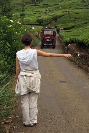 indigenous medicine: On the tea plantation near Haputale, Sri Lanka