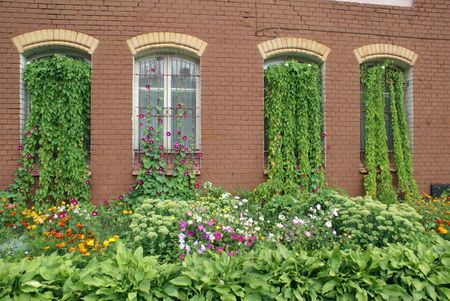 Windows with flowers on the brick wall in Baltysk, Russia                  photo