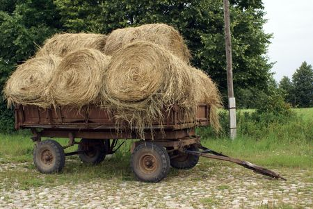 Cart with dry grass in Domnovo, Kasliningrad region, Russia                photo