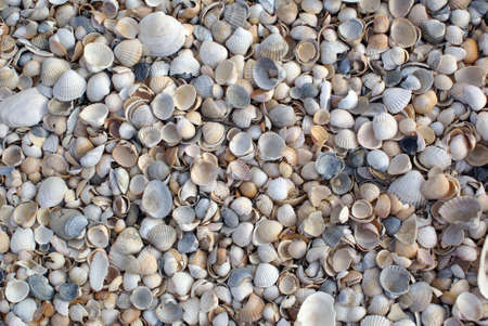 azov sea: Shells on the beach, Azov sea coast, Russia