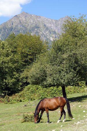 Horse in Krasnaya Polyana near Sochi, Russia Stock Photo - 2058250