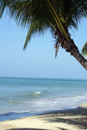 thee: Palm thee on the beach in Thailand