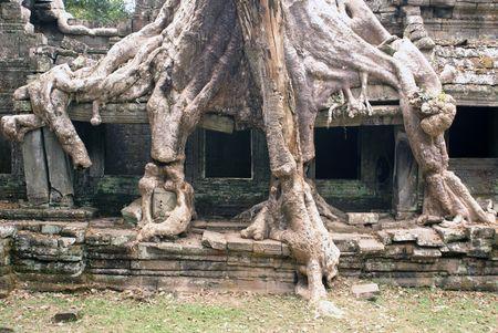 cambodia sculpture: Big temple amnd big roots               Stock Photo