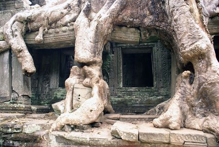Roots and wall of temple, Angkor, Cambodia                   photo