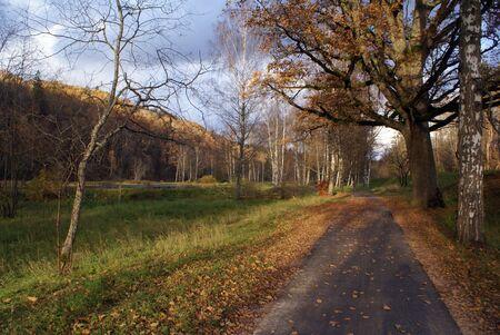 sigulda: Forest, road and autumn near Sigulda, Latvia                  Stock Photo