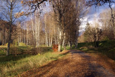 sigulda: Yellow leaves and trees near Sigulda, Latvia                 Stock Photo