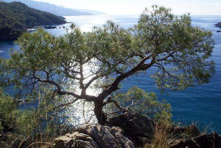 oludeniz: Tree o the sea coast near Oludeniz, Turkey