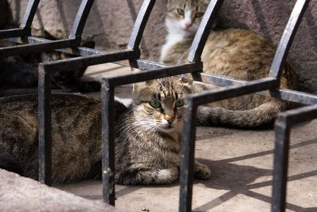 Cats on the street in Odessa,. Ukraine            photo