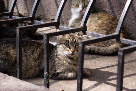 odessa: Cats on the street in Odessa,. Ukraine            Stock Photo