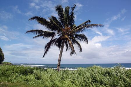 Palm tree and plants on the sea coast in Upolu island, Samoa photo