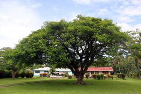 traditional house: Traditional house under big tree in Apia, Upolu island, Samoa  Stock Photo