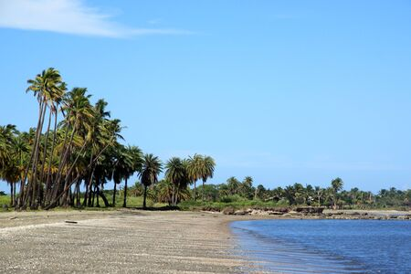 Palm trees on the beach near Nadi in Fiji Standard-Bild