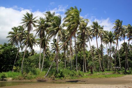 Palm trees near the water on the beach, Vanuatu Stock Photo