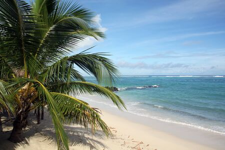 Palm tree on the white sand beach and sea in Samoa Stock Photo - 7605040
