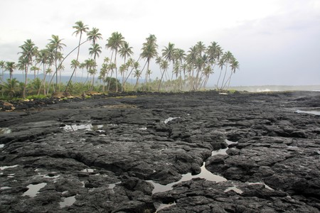 Black lava field on savaii island, Samoa photo