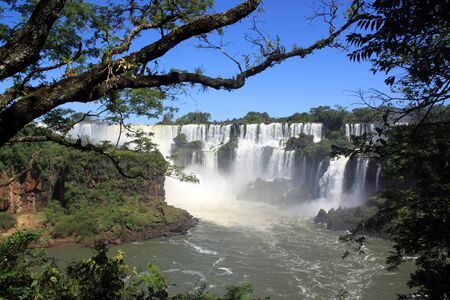 Trees in the forest and Iguazu waterfall in Argentina photo