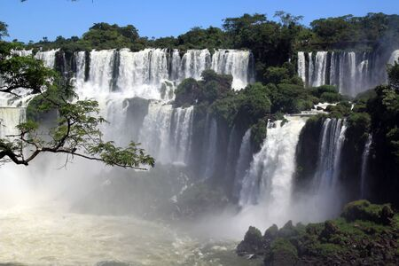 Branch of tree and wide Iguazu waterfall in Argentina photo
