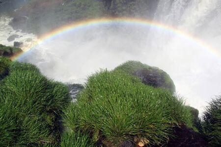 Wet green grass and waterfall Iguazu in Argentina Stock Photo - 7640378