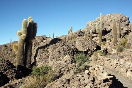 incahuasi: Footpath and cactuses on the island Incahuasi in salt lake Uyuni in Bolivia Stock Photo