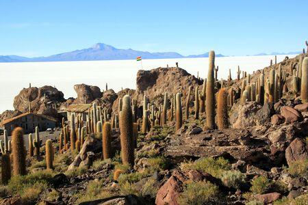 incahuasi: Cactuses on the island Incahuasi in salt lake Uyuni in Bolivia Stock Photo
