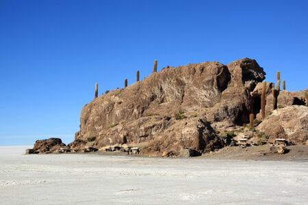 incahuasi: Cactuses on the island Incahuasi in uyuni salt lake, Bolivia