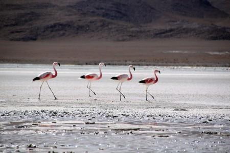 Salt lake and flamingoes near Uyuni in Bolivia photo