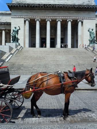 capitolio: Horse near entrance of Capitolio in Havana, Cuba