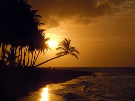 holiday destinations: Palm trees and coast with sunset in Dominicana, Caribbean          Stock Photo