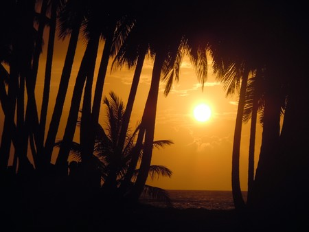 caribbean climate: Palm trees and sun on the coast in Dominicana, Caribbean