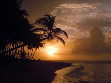 Sunset and palm trees on the coast in Dominicana            Stock Photo