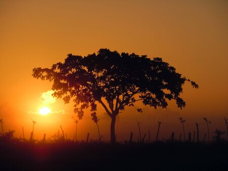 climate morning: Sunrise, tree and farm field in Cuba