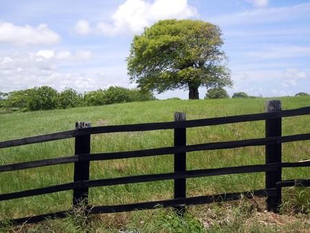 Black fence, tree and green farm field           Stock Photo - 7786037