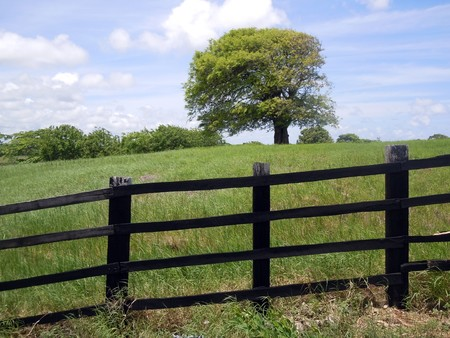 paddock: Black fence, tree and green farm field           Stock Photo