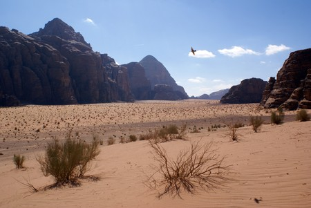 Bird and red sand in desert Wadi Rum, Jordan                 Stock Photo