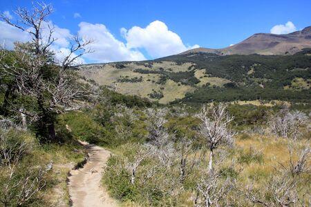 chalten: Footpath and forest in mountain area near El Chalten, Argentina