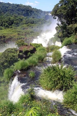 Forest and river near Iguazu falls in Argentina photo