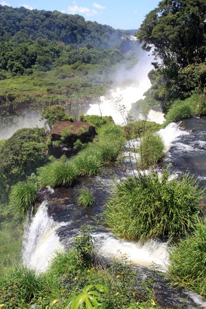 Forest and river near Iguazu falls in Argentina photo