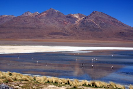 Mountain, lake and flamingoes near Uyuni in Bolivia photo