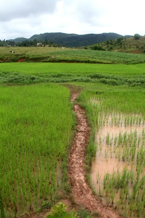 Footpath on the rice field in mountain area of Shan state, Myanmar Stock Photo - 11332830