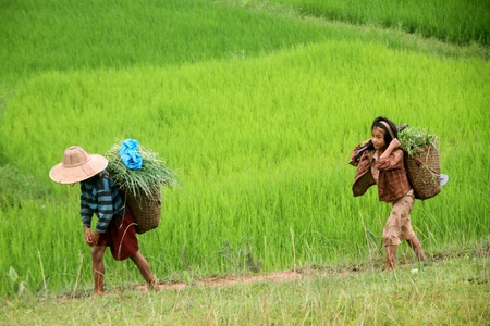 birma: Jongen en meisje op het voetpad in de rijst veld, Myanmar