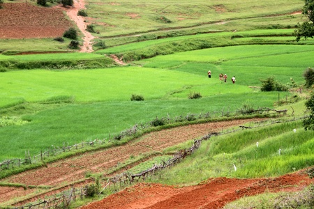 Rice fields on the slopes of mountain in Shan state, Myanmar photo