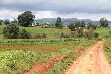 Dirty roan and cornfield in Shan state, Myanmar photo