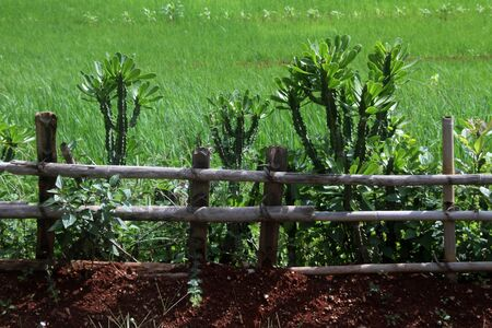 Wooden fence and green farm field in Myanmar photo