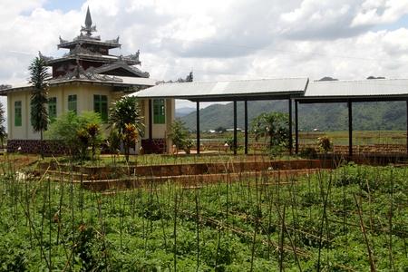 Champ de tomates dans le monast�re bouddhiste, le lac Inle, Myanmar Banque d'images - 11332755