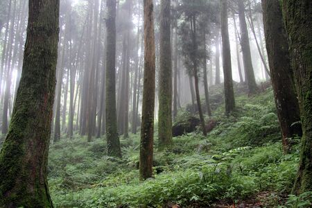台湾阿里山国立公園の朝