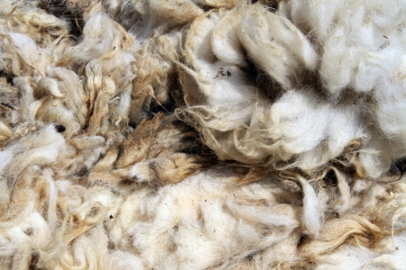 The heap of dirty sheep wool on the stall  photo