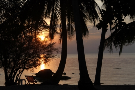 Palm trees on the beach in Ko Phangan, Thailand photo