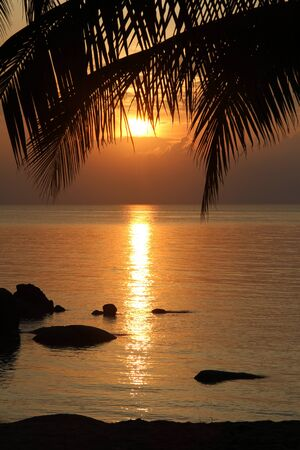 Sunset and palm tree on the beach in Ko Phangan, Thailand photo