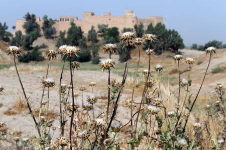 shush: Burdock and old fortress in Shush, Iran
