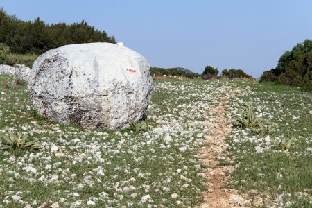 clay stone road in jungle: Big stone near the footpath and flowers on the field